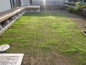 2010.10.08 芝の状態.jpg