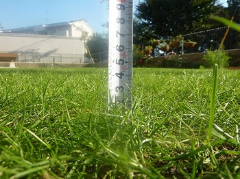 2010.11.06 芝刈り後2.jpg