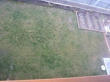 2011.02.23 芝の状態1.jpg