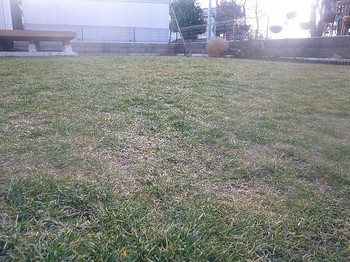 2011.02.23 芝の状態3.jpg